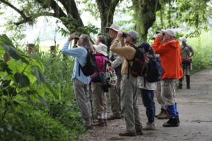Birding the New World Tropics