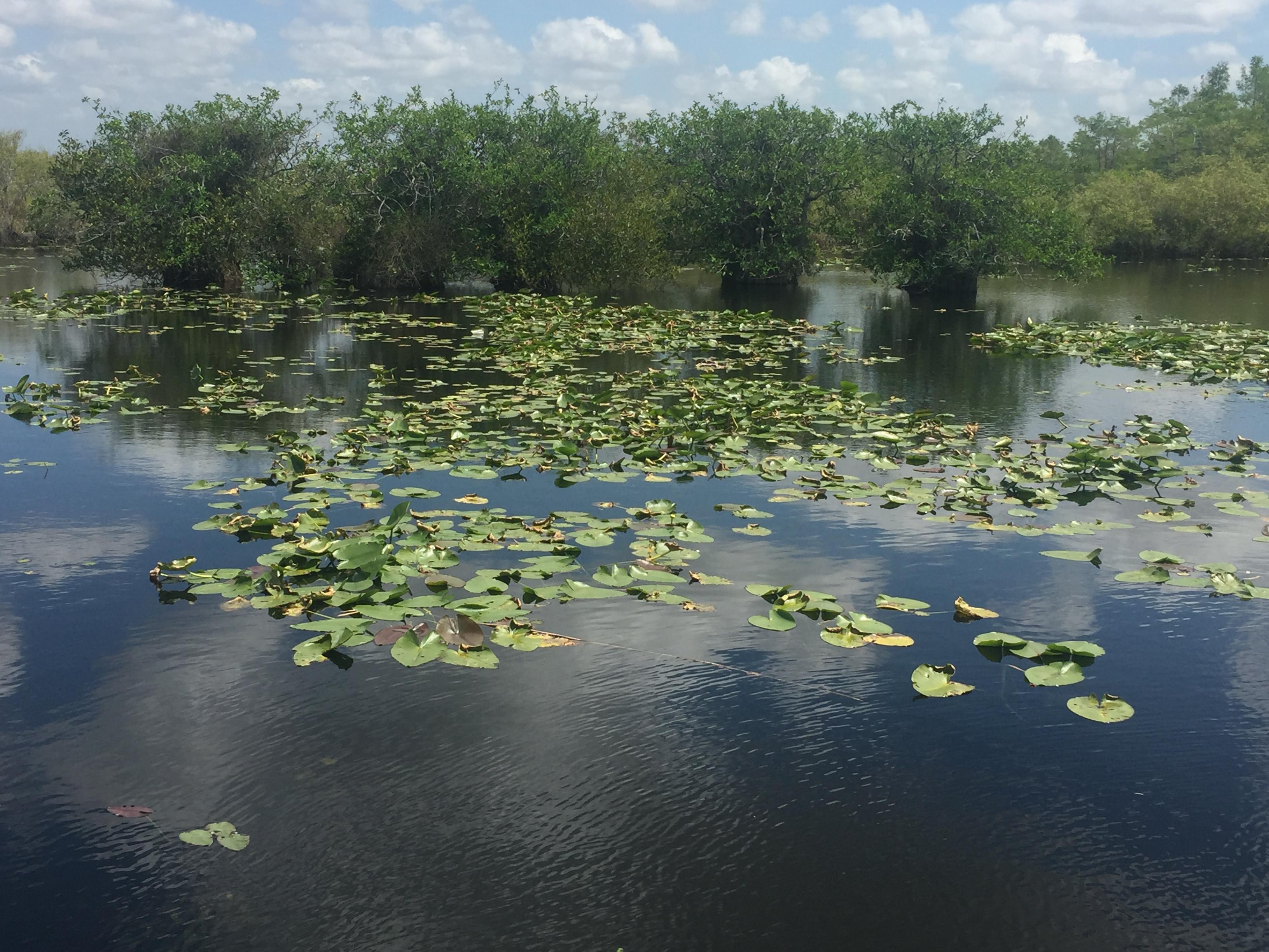 South Florida's Caribbean Birds