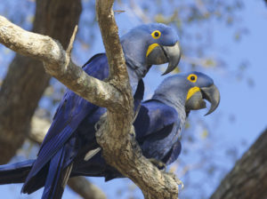 Pantanal Wildlife Tour