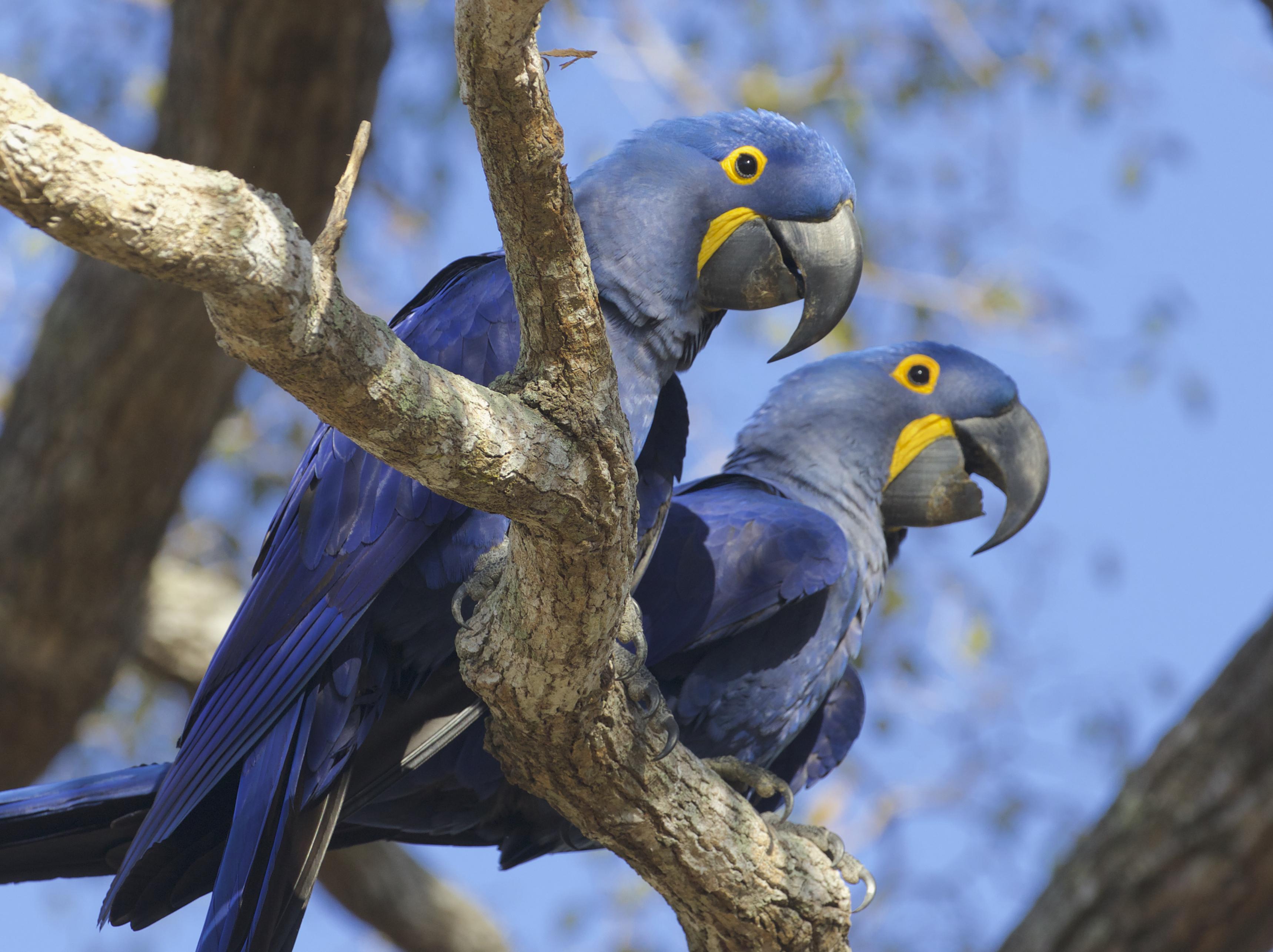 Pantanal Wildlife Tour