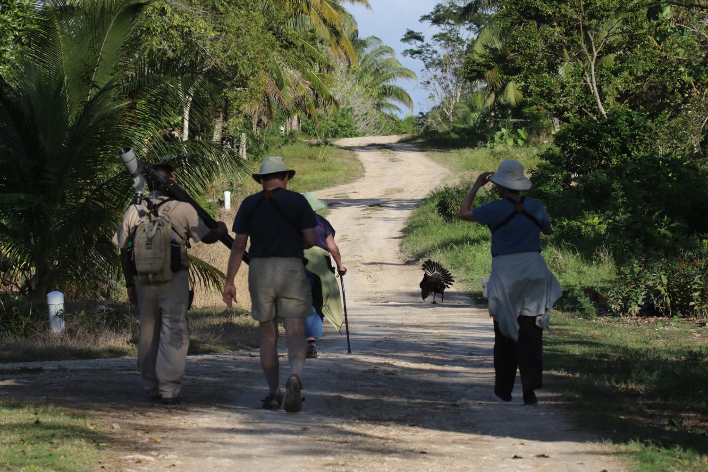 Belize Birding Tour