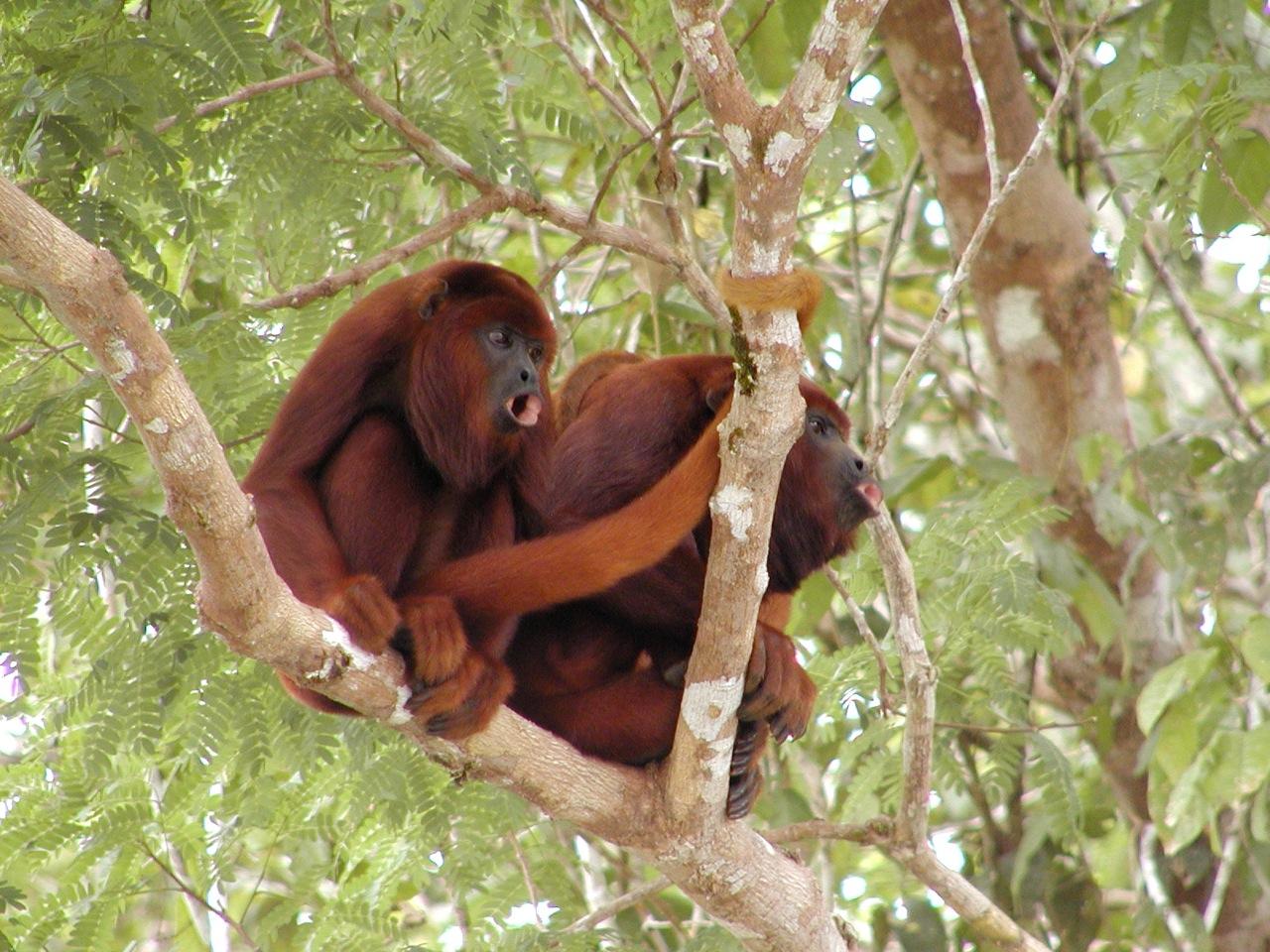 Guyana Nature Tour