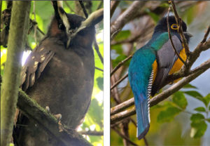 Southern Belize Nature Tour