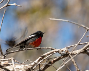 Southeast Arizona Birding Tour