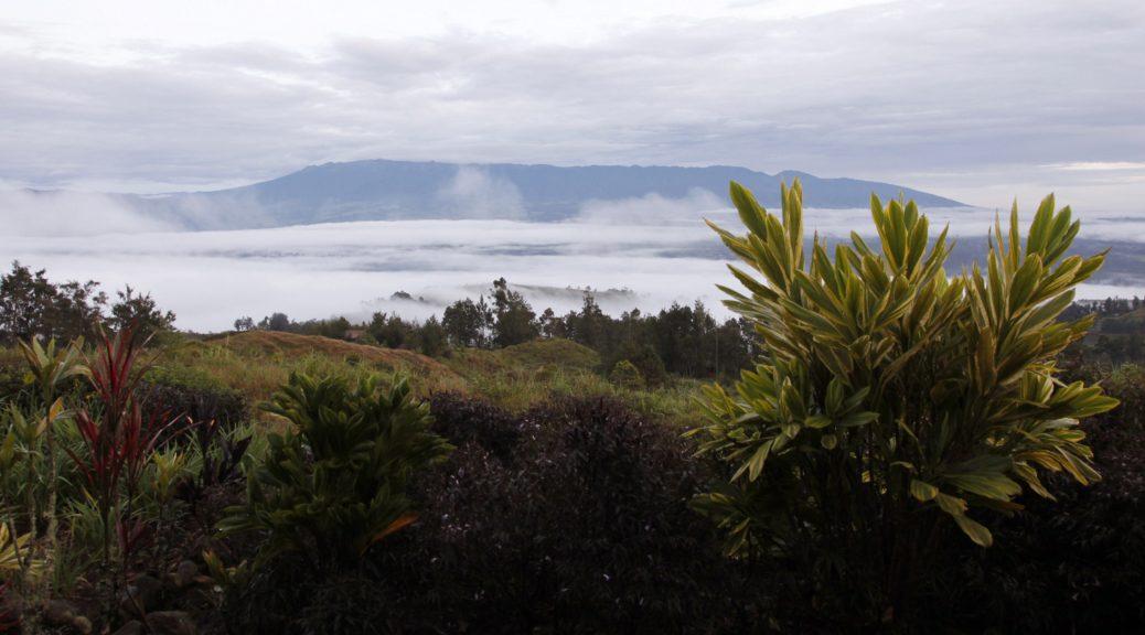 Papa New Guinea Birding Tour