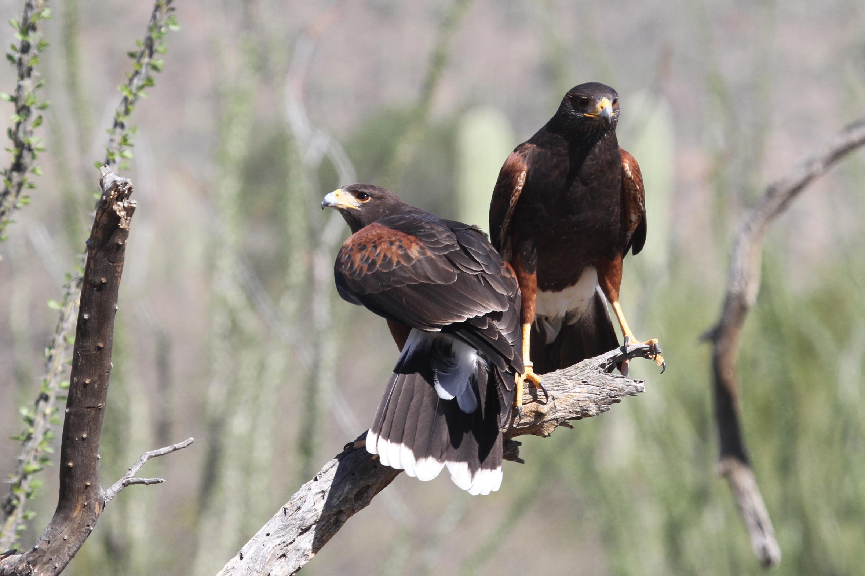 Geometry of Birding