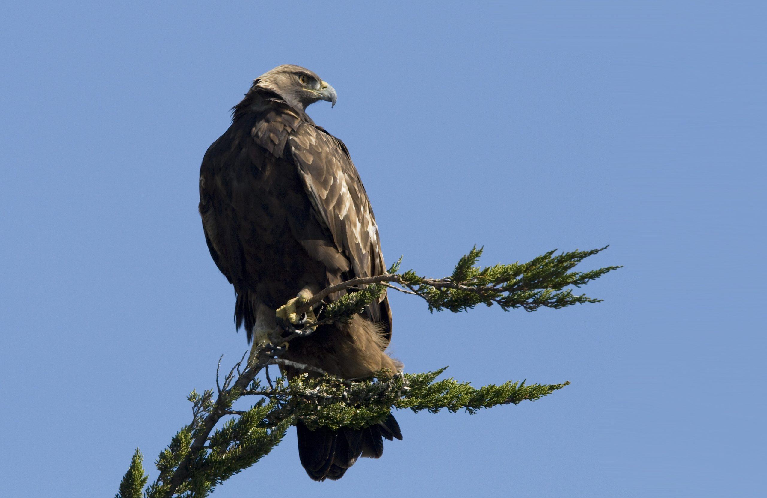 colorado birding tour