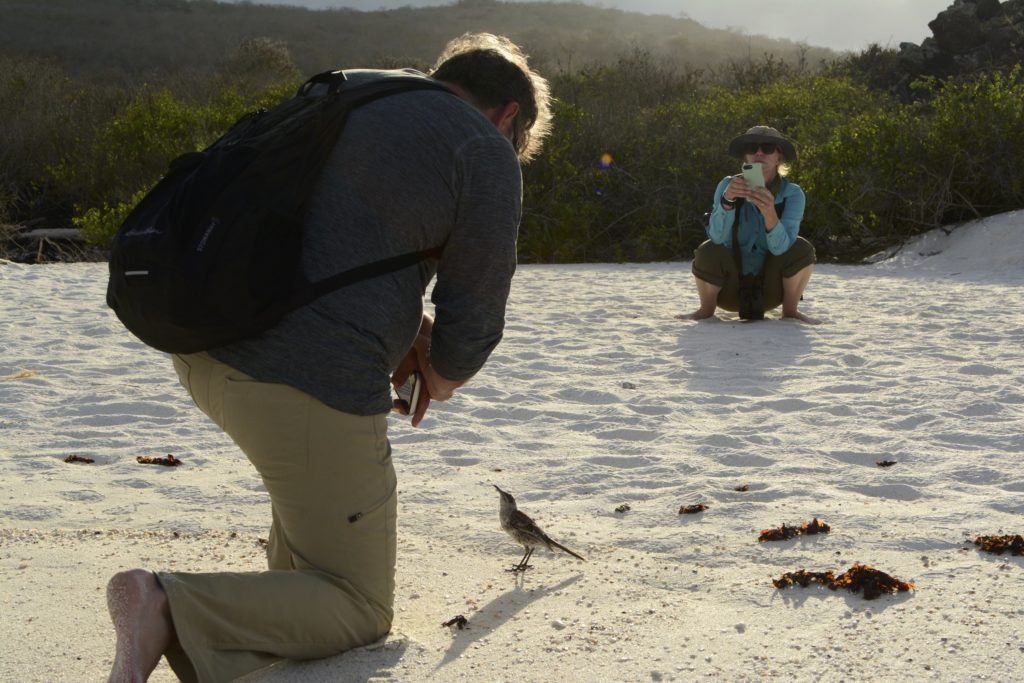Up-close photography is easy on our vaccinated cruises to the Galapagos birds you could see on Naturalist Journeys' vaccinated cruises