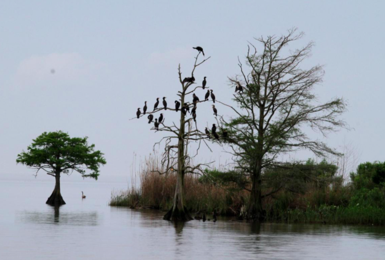 Our US travel to Shorebird School includes a private boat tour of the Mobile-Tensaw Delta