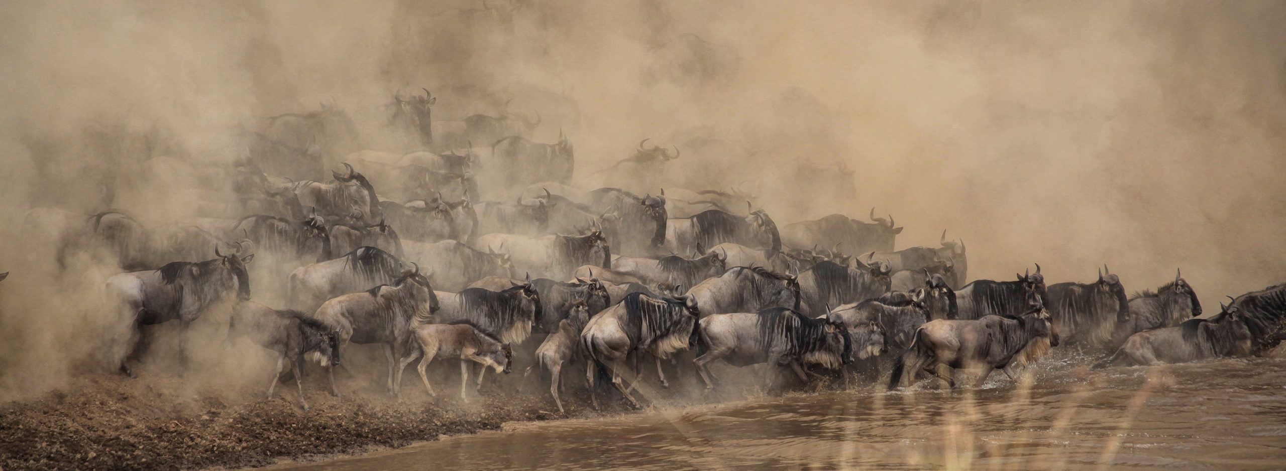 An international travel agent is how to get to the Maasai Mara River Crossing