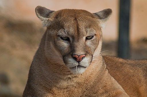 Guyana travel offers looks at Puma